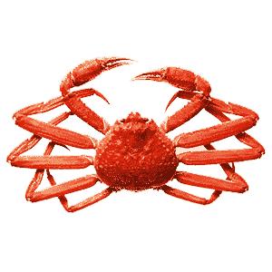 ズワイガニ(ずわい蟹)通販店 比較・ランキング