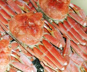 冷凍蟹(ズワイガニ)