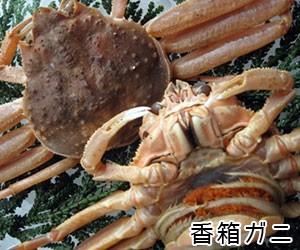 香箱蟹(ズワイガニ メス)